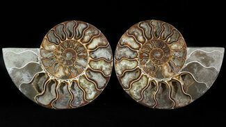 "6.2"" Cut/Polished Ammonite Pair - Agatized For Sale, #47690"