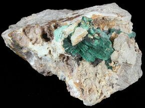 "Buy 2.5"" Fibrous Malachite Crystals on Matrix - Morocco - #49456"