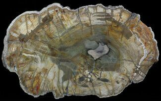 "11"" Colorful Petrified Wood Slab - Madagascar For Sale, #49931"