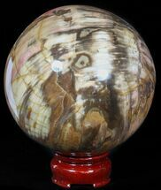 "Buy 3.9"" Colorful Petrified Wood Sphere - #49771"