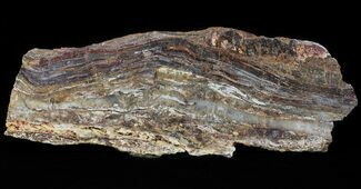 Rare North Pole Dome Stromatolite Slice - 3.49 Billion Years For Sale, #50756