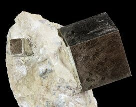 Pyrite - Fossils For Sale - #51237