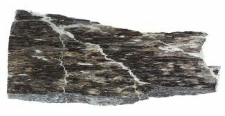 Liopleurodon sp. - Fossils For Sale - #53451