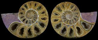 "3.25"" Cut & Polished, Agatized Ammonite Fossil - Jurassic For Sale, #53813"