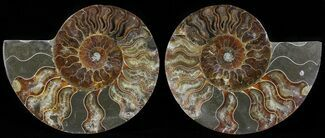 "5.5"" Polished Ammonite Pair - Agatized For Sale, #54326"