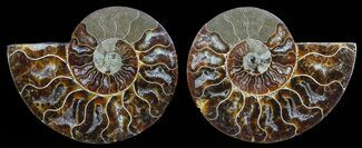 "Buy 3.7"" Polished Ammonite Pair - Agatized - #59440"