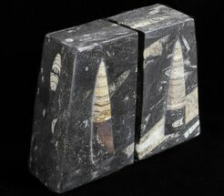 "Buy 4.7"" Polished Orthoceras Bookends - Morocco - #61327"