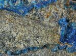 Vibrant Blue Chalcanthite on Sandstone - Poland - #61757-2