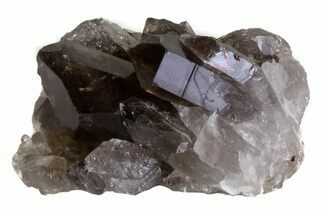 "Buy 2.4"" Smoky Quartz Crystal Cluster - Brazil - #61459"