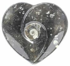 "4.5"" Heart Shaped Fossil Goniatite Dish For Sale, #61289"