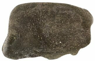 "5.9"" Pyritized, Polished Iguanodon Bone - Isle Of Wight For Sale, #63323"