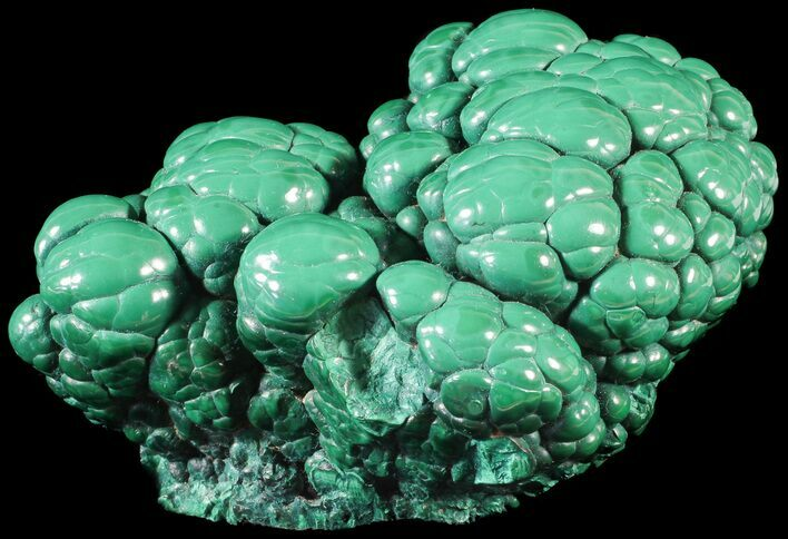 "3.6"" Polished Malachite ""Brain"" - Congo"