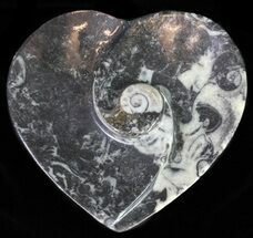 "Buy 4.5"" Heart Shaped Fossil Goniatite Dish - #61279"