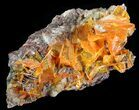 "2.8"" Bright Orange Wulfenite Cluster - Large Crystals - #39140-1"