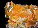 "2.8"" Bright Orange Wulfenite Cluster - Large Crystals - #39140-5"