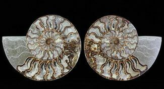"Buy 8.5"" Split Fossil Ammonite Pair - Agatized - #64852"