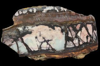 "Buy 8.5"" Polished Outback Jasper - Western Australia - #65389"