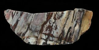 "Buy 5.5"" Polished Outback Jasper - Western Australia - #65377"