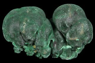 "Buy Silky, 1.2"" Botryoidal Malachite Crystal Formation - Congo - #67459"