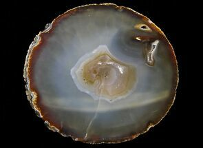 "Bargain, 7"" Polished Brazilian Agate Slice For Sale, #68432"