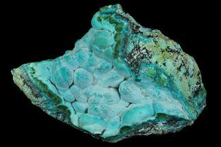 "3"" Botryoidal Chrysocolla and Malachite - Congo For Sale, #69809"
