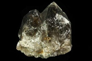 "1.3"" Smoky Quartz Crystal Cluster - Namibia For Sale, #69185"