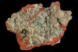 "3.8"" Fibrous Rosasite and Selenite Association - Mexico - #69485-1"