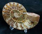 "Beautiful 3.9"" Split Ammonite (Half) - #5650-2"