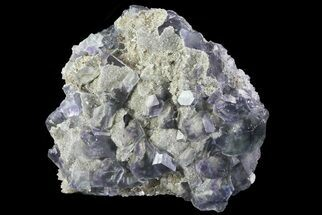 Fluorite - Fossils For Sale - #31539