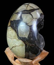 "Buy 6"" Septarian ""Dragon Egg"" Geode - Black Crystals - #72064"