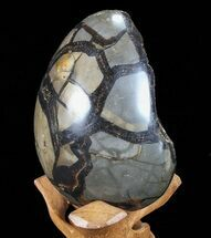 "Buy 5.7"" Septarian ""Dragon Egg"" Geode - Black Crystals - #72097"