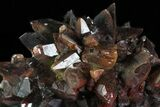"2.5"" Deep Red, Calcite Crystal Cluster - Mexico - #72014-2"