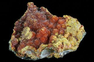 "1.4"" Botryoidal Red-Orange Orpiment - Peru For Sale, #70499"