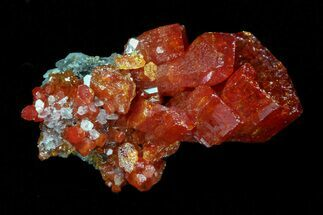 "Buy .5"" Vibrant Red Vanadinite Crystal - Arizona - #69604"
