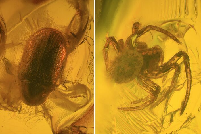 Fossil Beetle (Coleoptera) & Spider (Aranea) In Baltic Amber