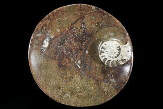 "6.8"" Round Fossil Goniatite Dish For Sale, #73982"