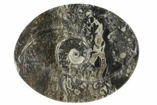 "4.7"" Oval Shaped Fossil Goniatite Dish For Sale, #73754"