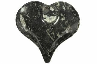 "Buy 7.8"" Heart Shaped Fossil Goniatite Dish - #77683"