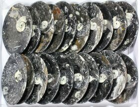 "Buy Wholesale Lot:  6"" Oval Fossil Stoneware Dishes - 15 Pieces - #77692"