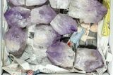"Wholesale Box: 26 Lbs Amethyst Crystals (2-4"") - Brazil - #77846-3"
