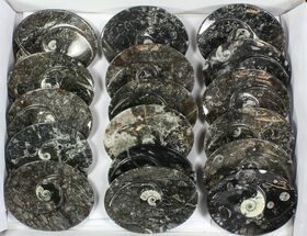 "Wholesale Lot:  5"" Fossil Orthoceras Stoneware Dishes - 26 Pieces For Sale, #77756"