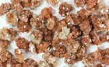 Wholesale Lot: Small Twinned Aragonite Crystals - 118 Pieces - #78103-1