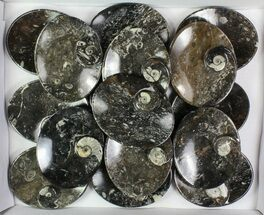 "Wholesale Lot:  5"" Oval Fossil Stoneware Dishes - 16 Pieces For Sale, #78023"