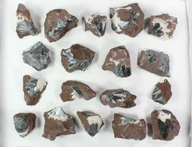 Buy Lot: Metallic Pyrolusite Crystal Sprays - 18 Pieces - #78040