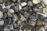"Wholesale Lot: 2-3"" Chalcedony Nodules - 108 Pieces - #78180-3"