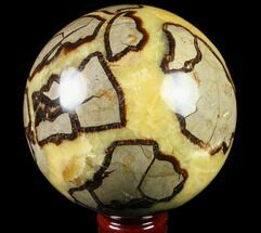 Septarian - Fossils For Sale - #79332