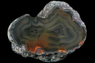 "3.7"" Beautiful Condor Agate From Argentina - Cut/Polished Face For Sale, #79142"