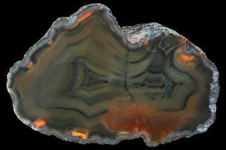 "Buy 3.5"" Beautiful Condor Agate From Argentina - Cut/Polished Face - #79201"