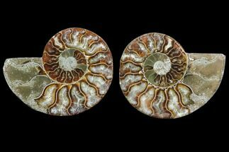 "3.15"" Cut & Polished Ammonite Pair - Agatized For Sale, #78392"