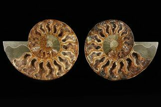 "4.4"" Cut & Polished Ammonite Pair - Very Sparkly Crystals For Sale, #78575"